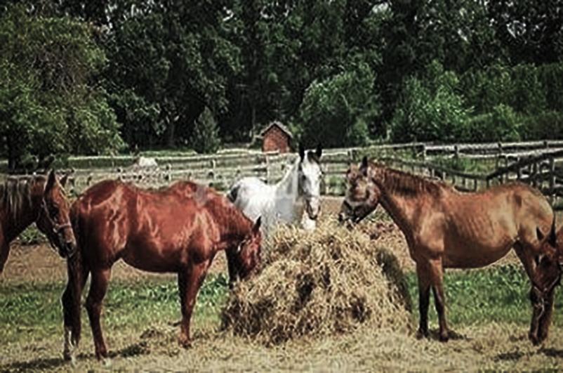 tmr_Equitazione in Puglia